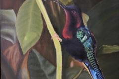 Colibri de Ste-Lucie