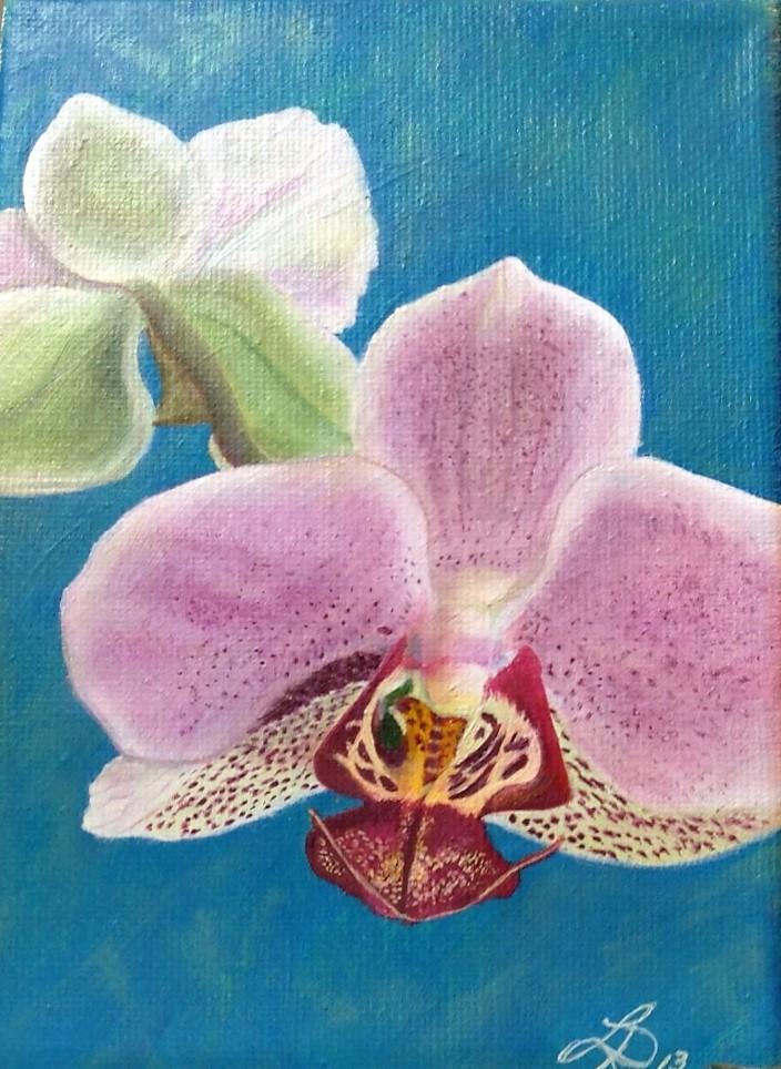 Orchidées merveilleuses #1