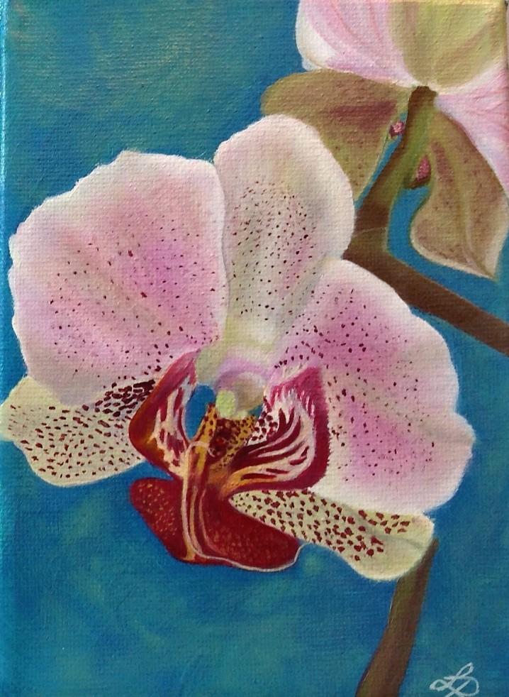 Orchidées merveilleuses #2
